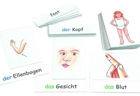 Beeldkaarten-menselijk lichaam