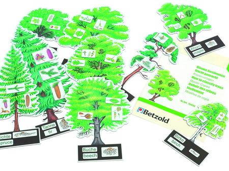 Het benoemen van boomsoorten