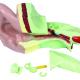 XL Model van het oor, 14 x44 x 28 cm met diverse onderdelen